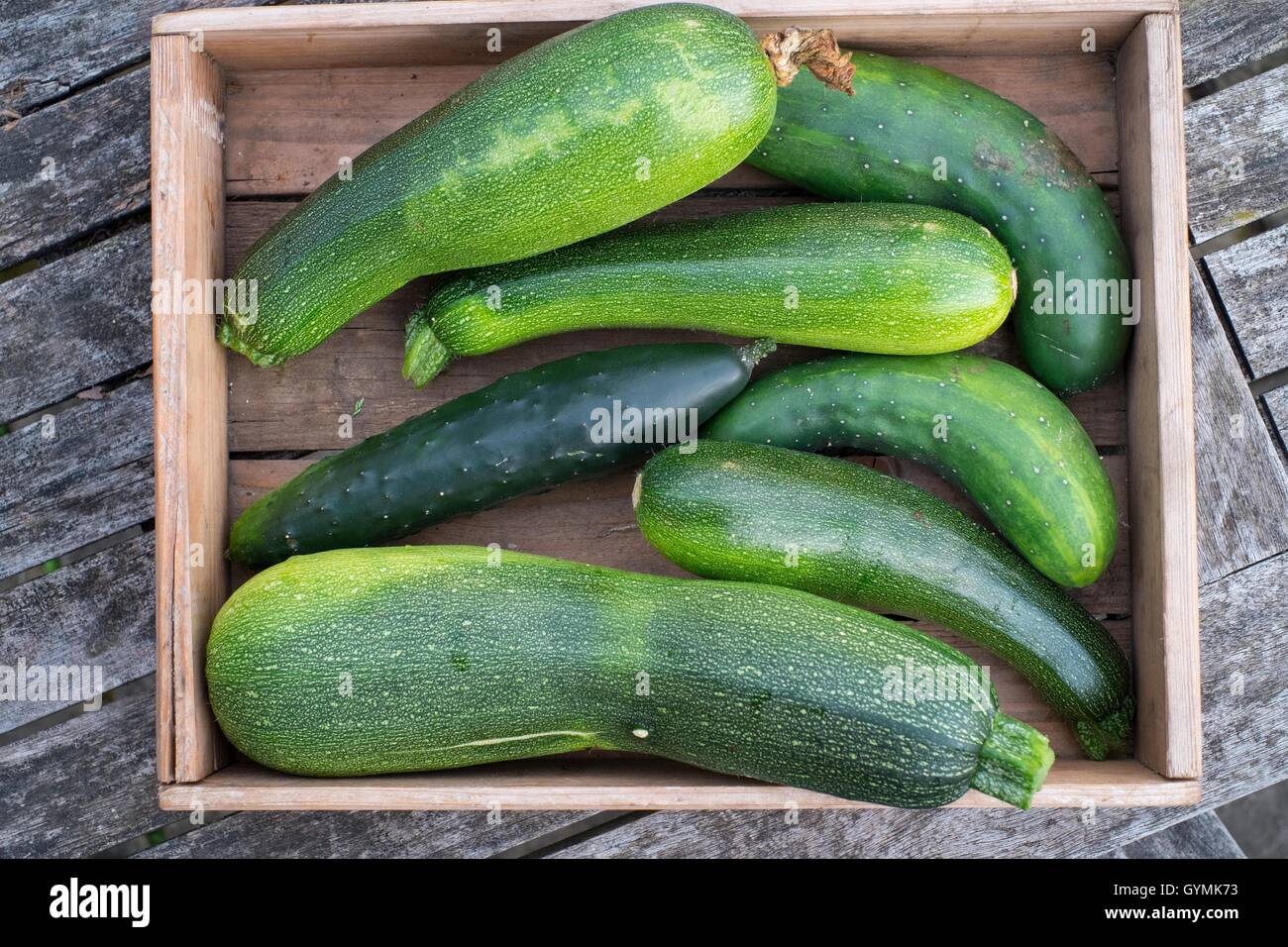Wooden Box of home grown outdoor cucumbers and courgettes. - Stock Image