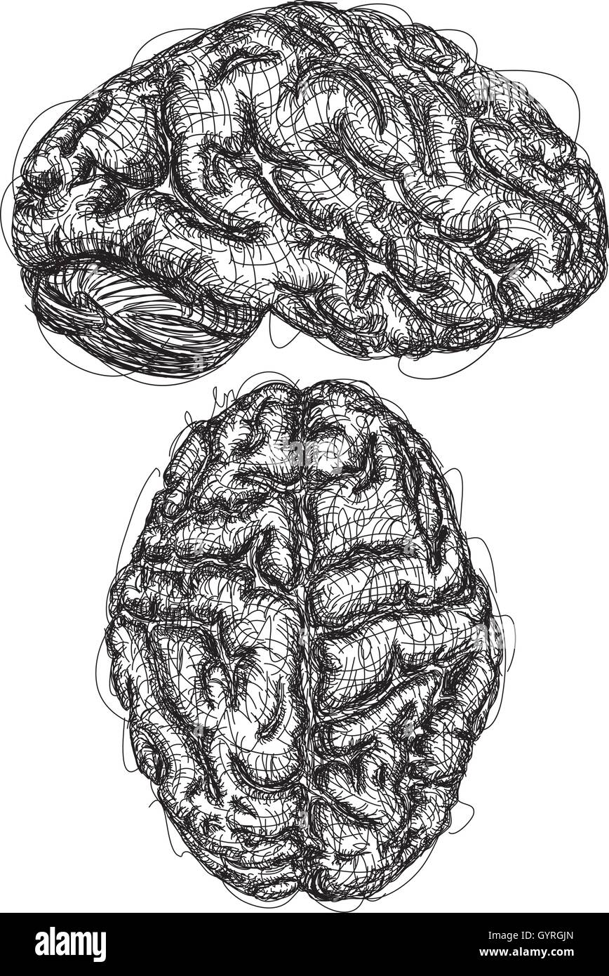 Brain Sketches A sketch of the top and side view of a brain - Stock Image