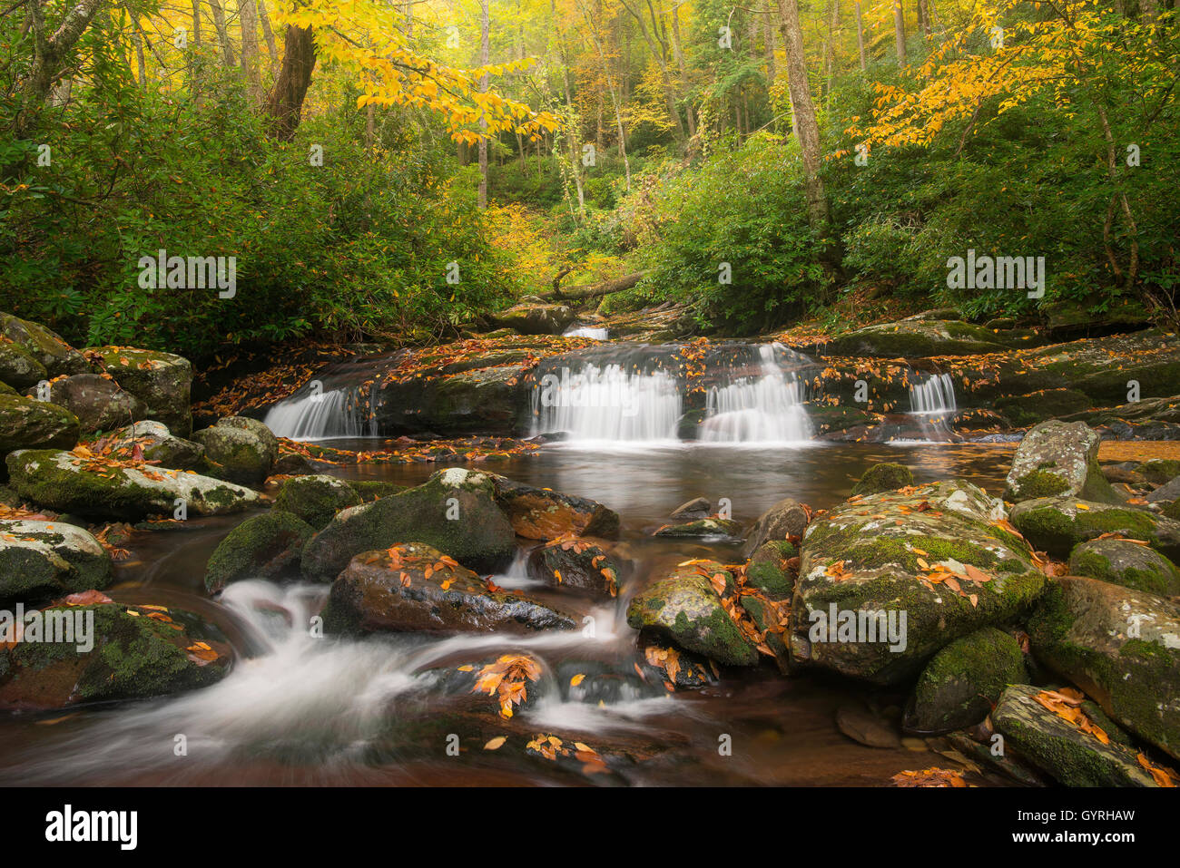 View of Road Prong stream & small waterfalls from Chimney Tops trail, Autumn, Great Smoky Mountain National - Stock Image