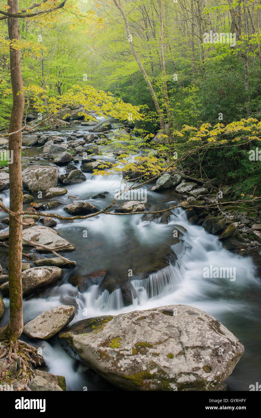 Middle Prong of Little River, Spring, Great Smoky Mountains National Park, Tennessee USA - Stock Image