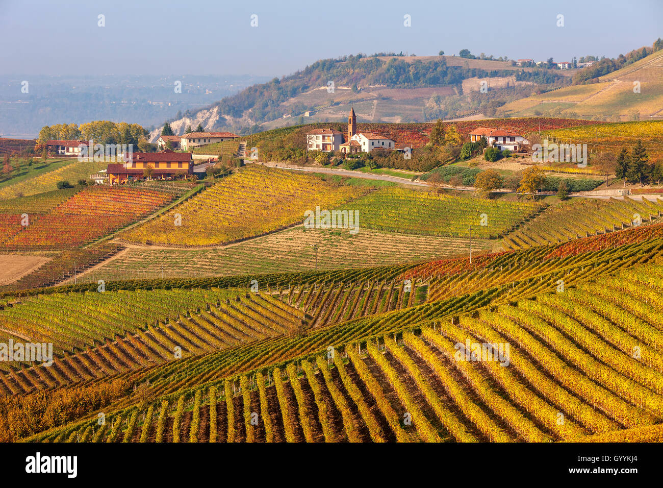 Rows of vineyards on hills of Piedmont, Italy in autumn. - Stock Image