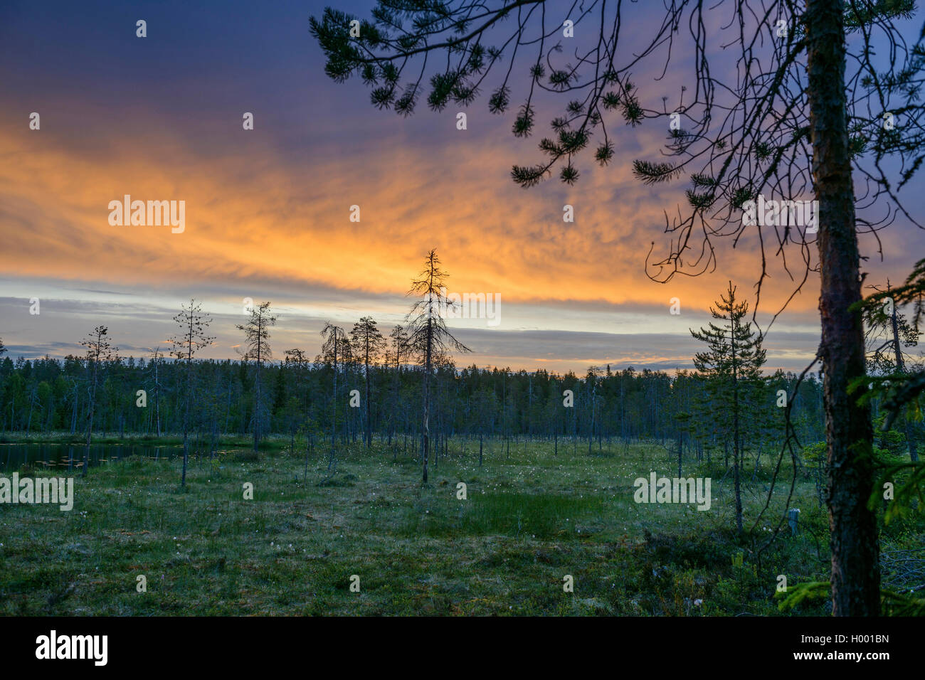 Moor in der finnischen Taiga vor Sonnenaufgang, Finnland, Taigawald | moorland in the Finnish taiga before sunrise, - Stock Image