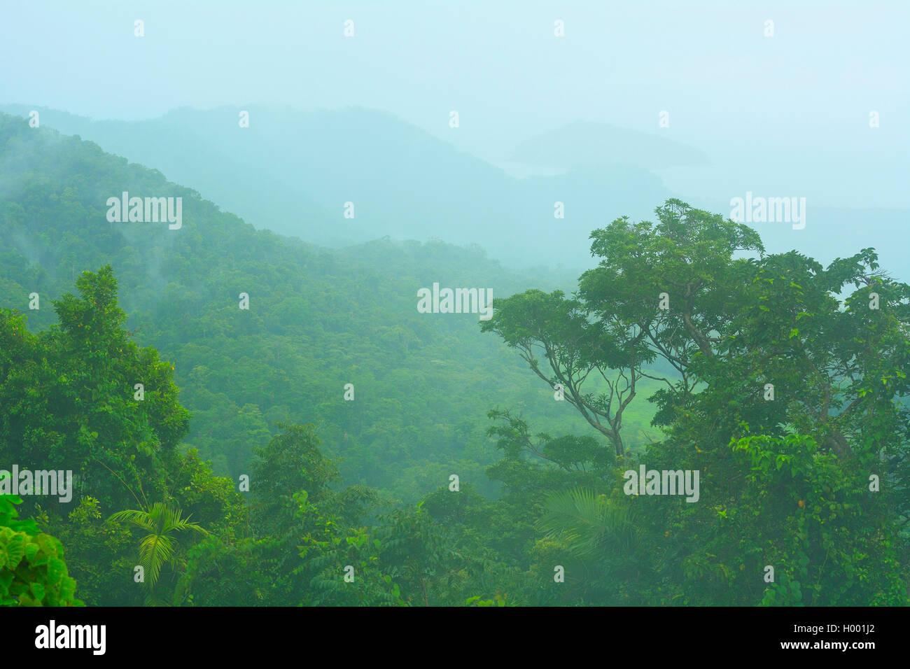 Landscape at Cape Tribulation Road, Daintree Rainforest, Australia, Queensland, Kimberley Stock Photo