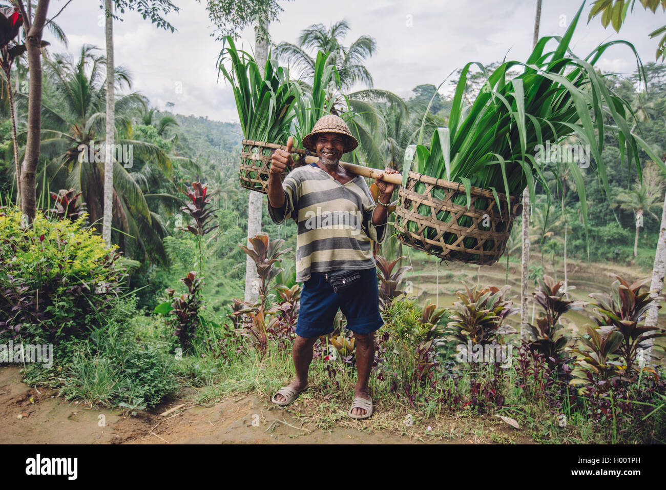Full length shot of old farmer carrying a yoke on his shoulders with cut grasses. Senior man smiling and giving - Stock Image