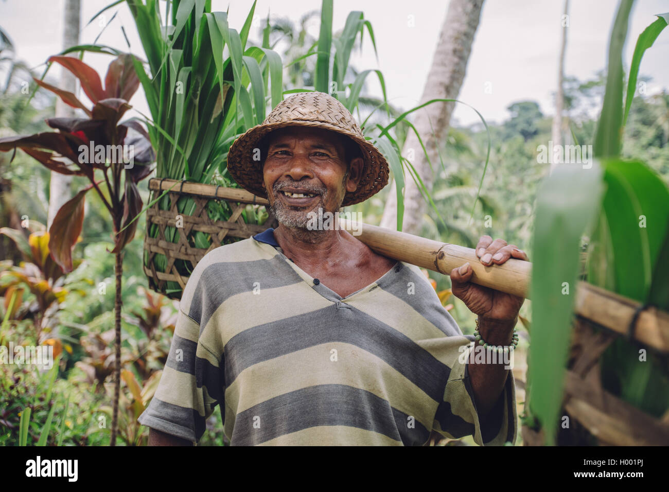 Shot of happy senior farmer carrying a yoke on his shoulders with seedlings. Old farmer working in his farm. - Stock Image
