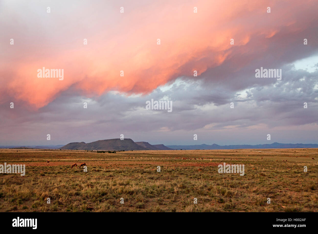Mountain Zebra National Park, Rooiplaat after sunset, South Africa, Eastern Cape, Mountain Zebra National Park Stock Photo
