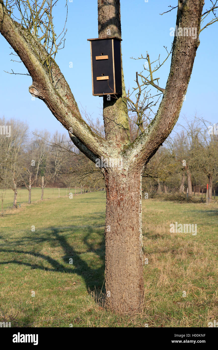 Fledermausnistkasten , Deutschland | bat box, Germany | BLWS421541.jpg [ (c) blickwinkel/W. Layer Tel. +49 (0)2302 - Stock Image