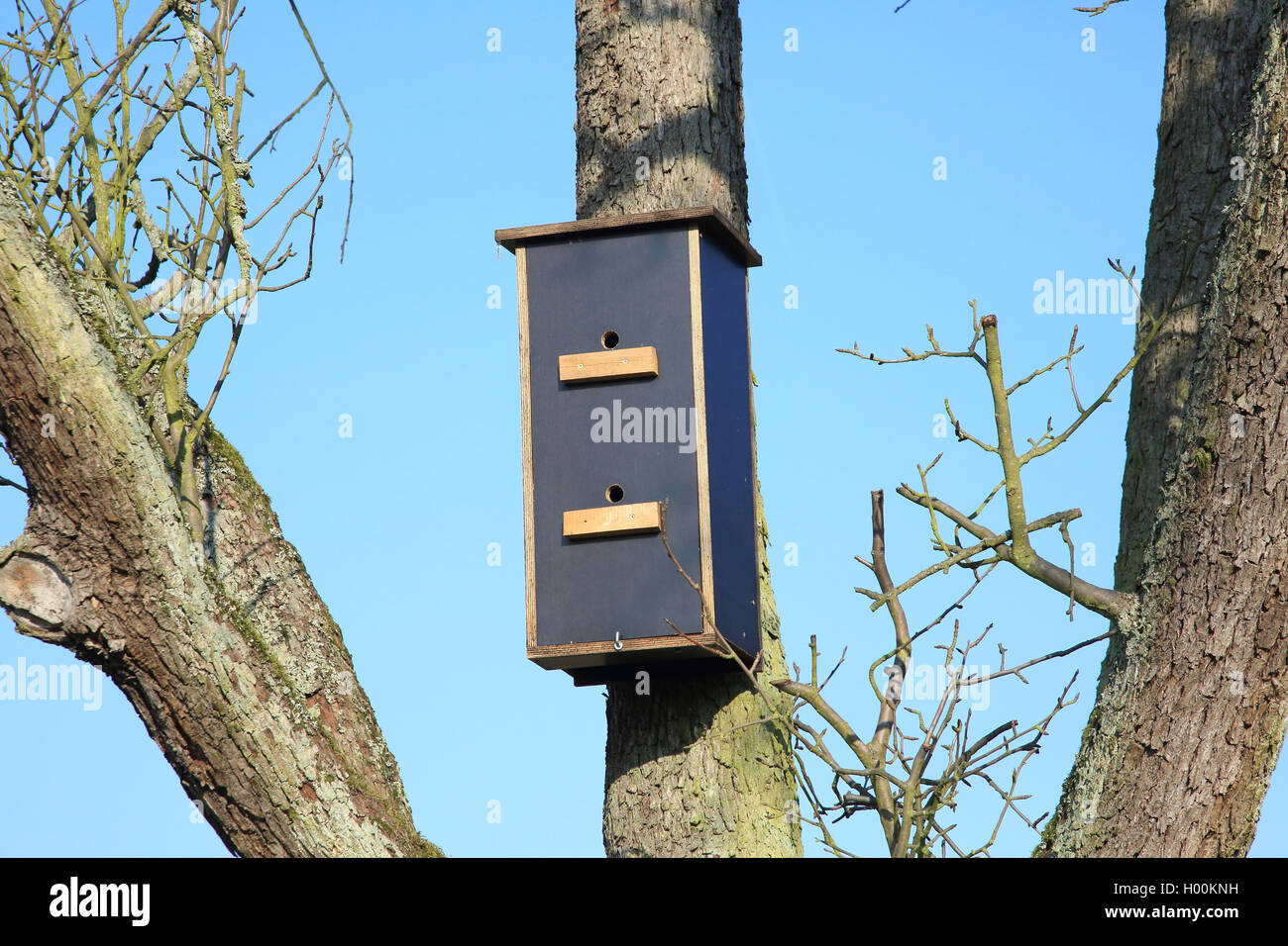 Fledermausnistkasten , Deutschland | bat box, Germany | BLWS421542.jpg [ (c) blickwinkel/W. Layer Tel. +49 (0)2302 - Stock Image