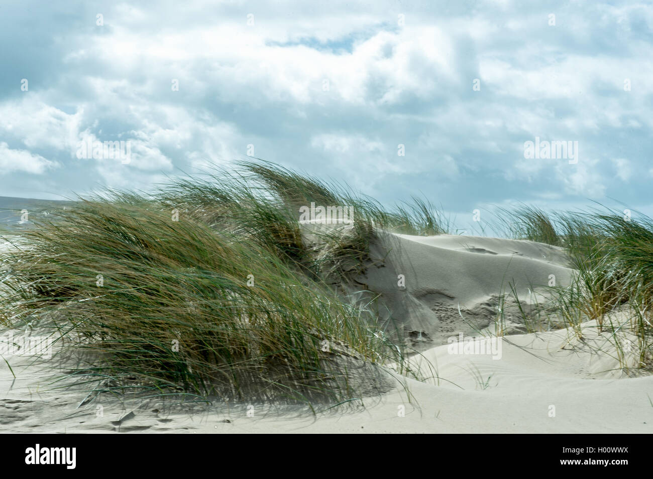 Sand dune in the wind - Stock Image