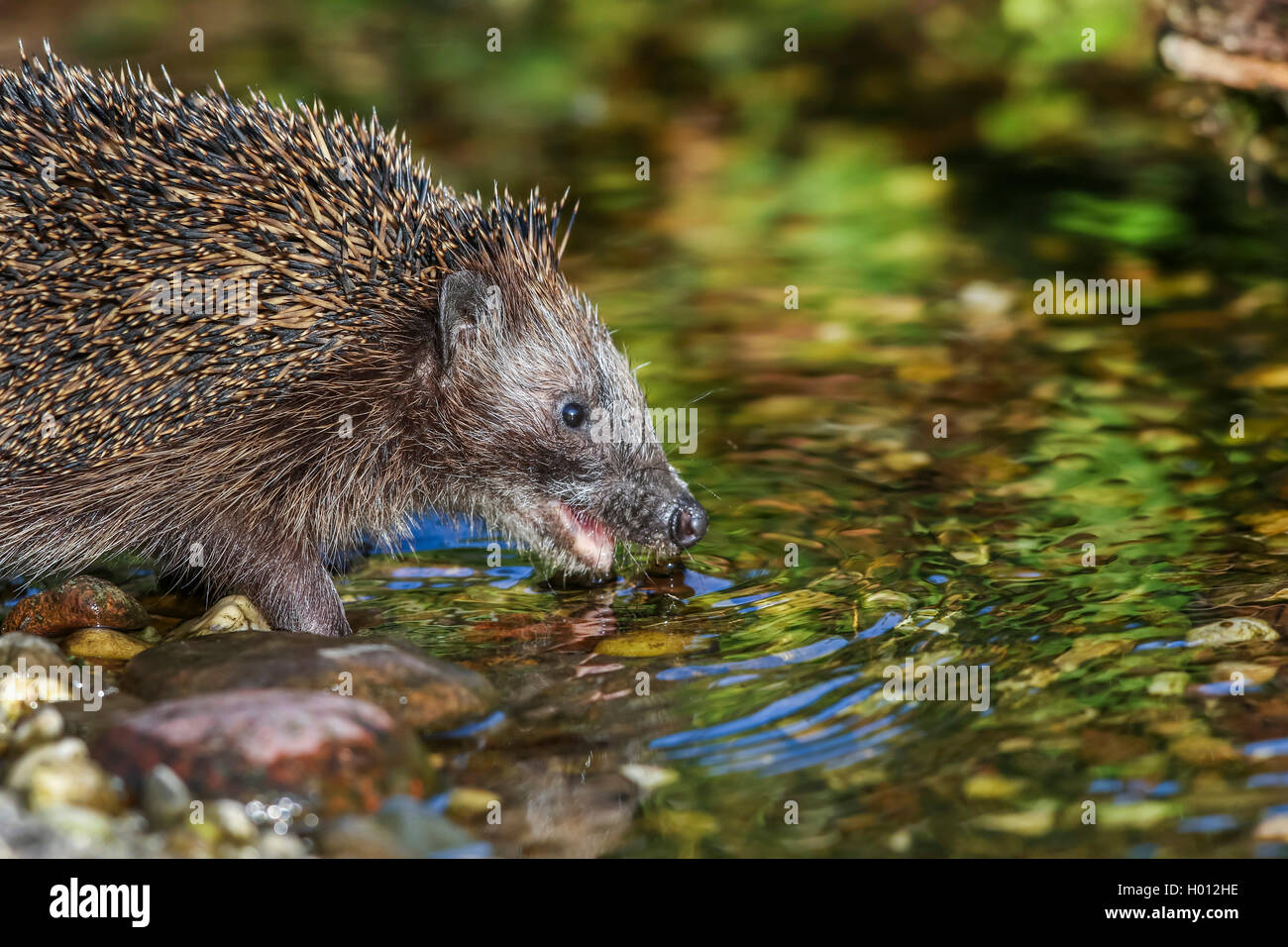 Igel Garten Stock Photos & Igel Garten Stock Images - Alamy
