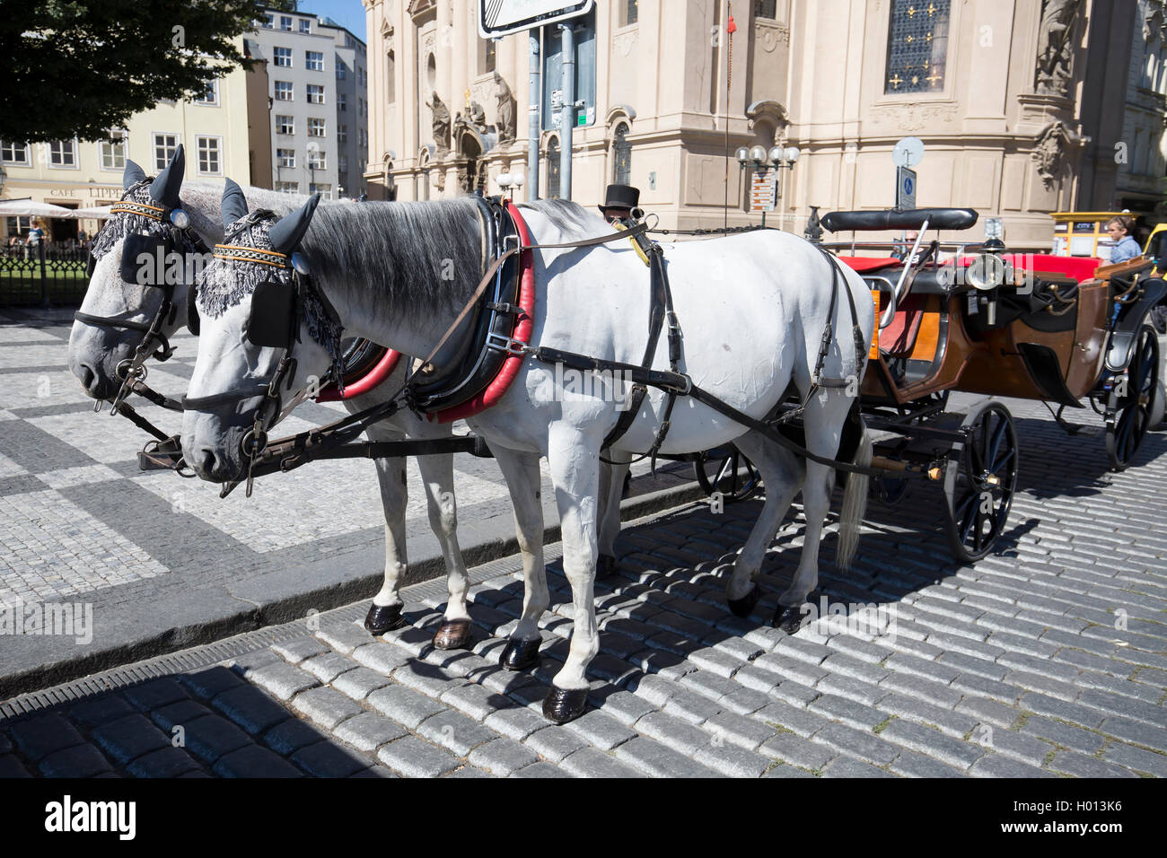 White horses with carriage in Prague await tourists for a tour around the city - Stock Image