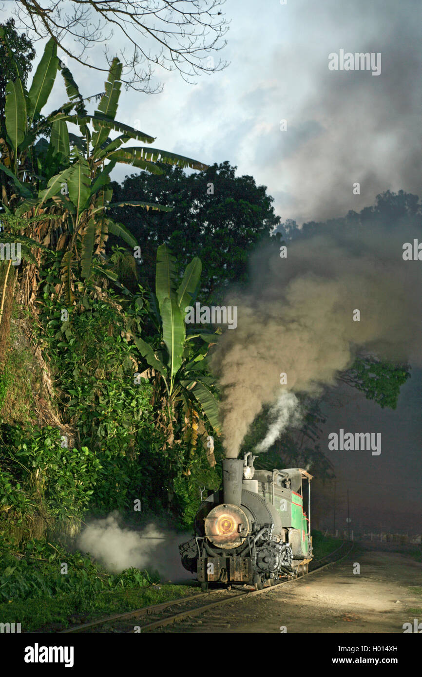 The omnipresent jungle of Assam, as an ex-Darjeeling two-foot gauge 0-4-0ST ends its days at Tipong Colliery on - Stock Image