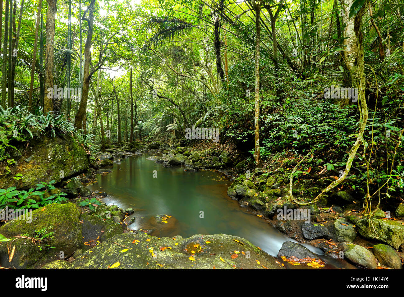 creek in tropical forest, Philippines Stock Photo - Alamy