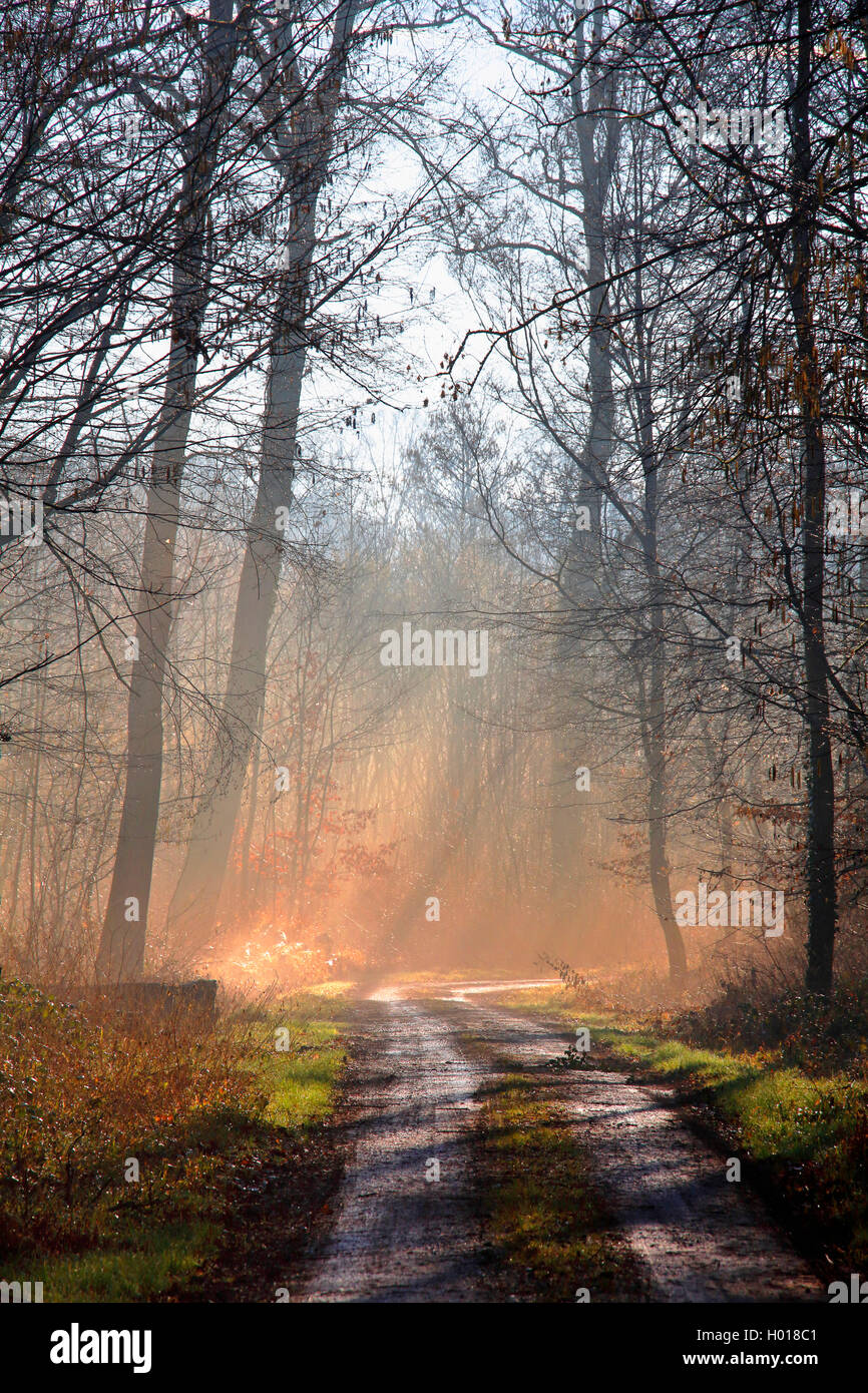 path and forest glade with sunrays , Germany, Baden-Wuerttemberg, Ortenau, Offenburg Stock Photo