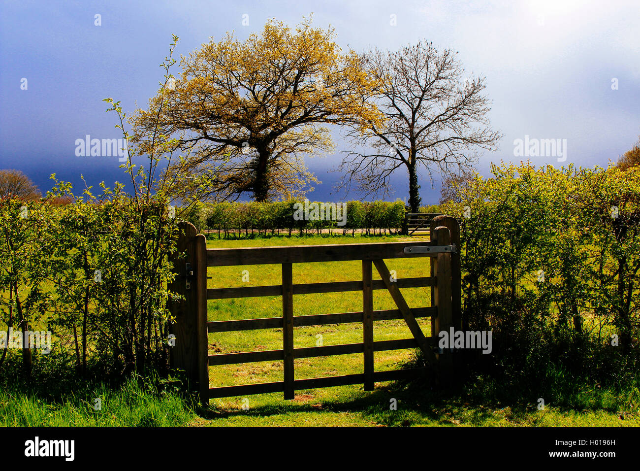 Field gate and meadow in spring sunlight - Stock Image