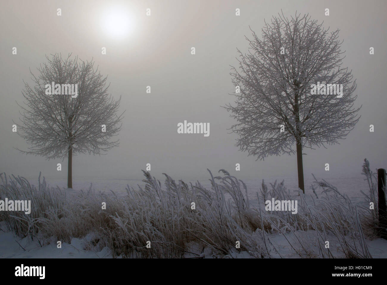 Winterlandschaft im Nebel am Morgen, Deutschland, Mecklenburg-Vorpommern, Biestow, Rostock | winter scenery with Stock Photo