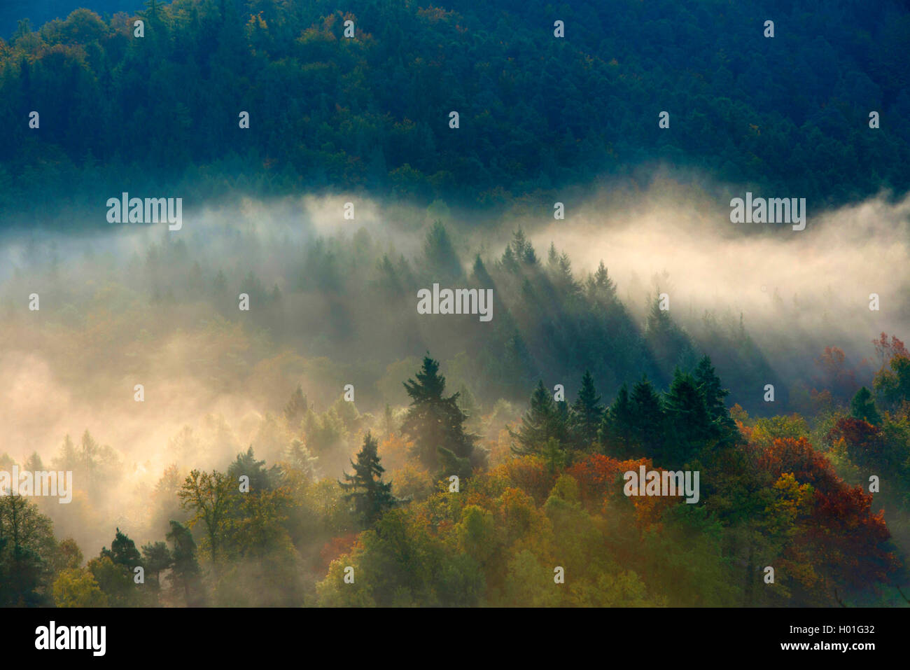 morning mist over the Black Forest, Germany, Baden-Wuerttemberg, Black Forest, Schauinsland Stock Photo
