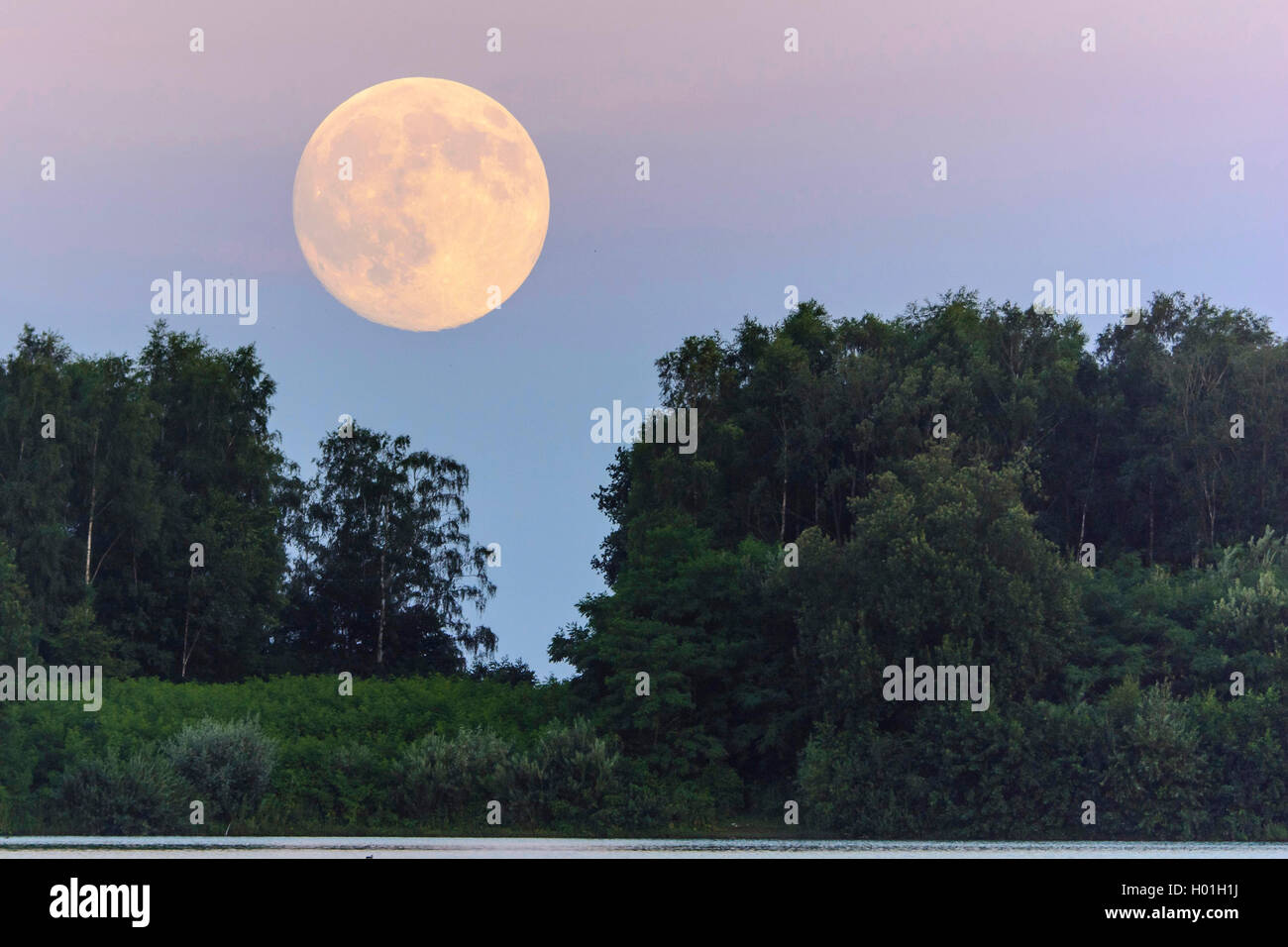 Vollmond ueber dem Dammer Bergsee, Deutschland, Niedersachsen, Damme | full moon over forest, Germany, Lower Saxony, - Stock Image