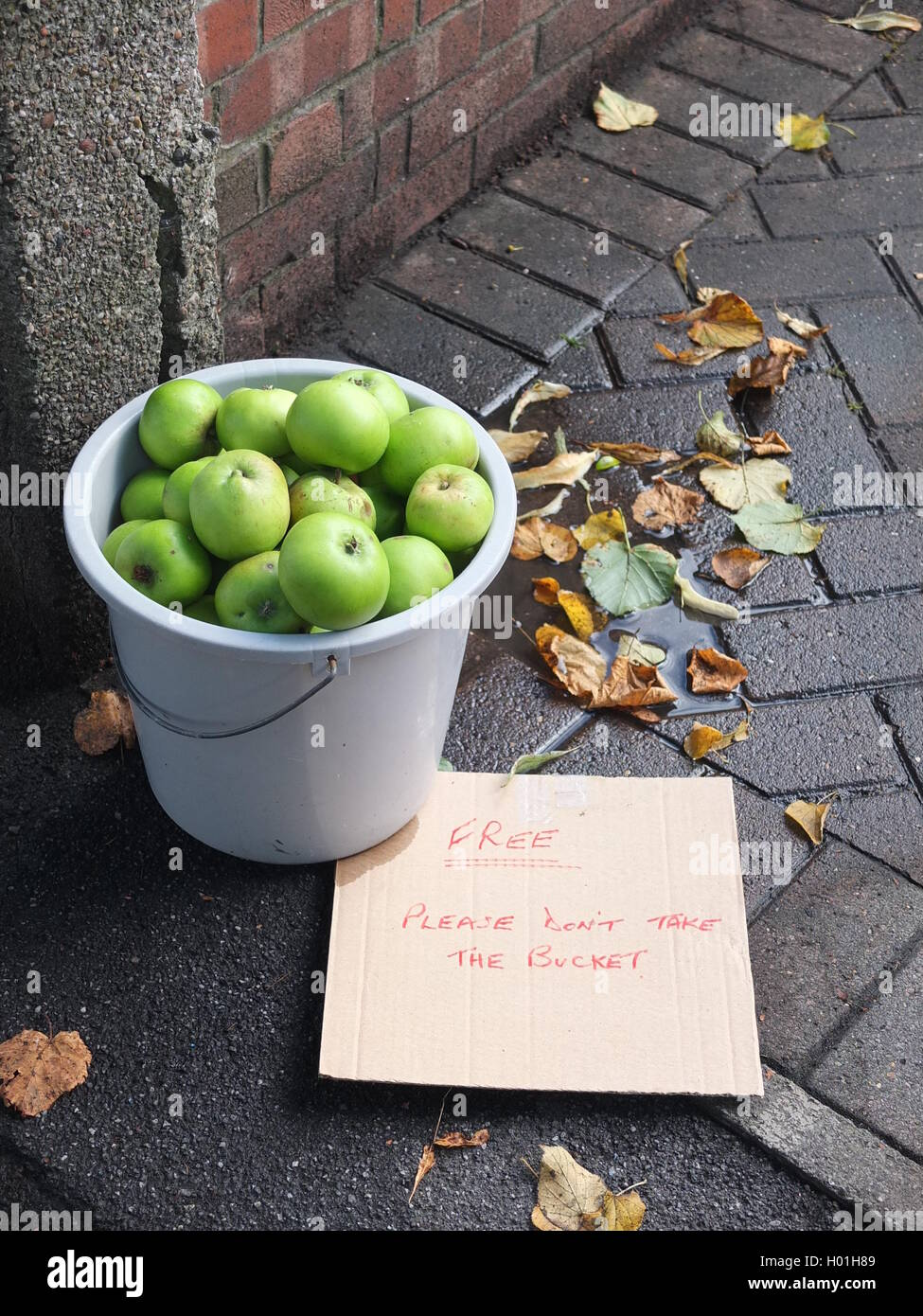 A bucket of cooking apples offered for free to passers by in Rivelin Valley, Sheffield. Stock Photo