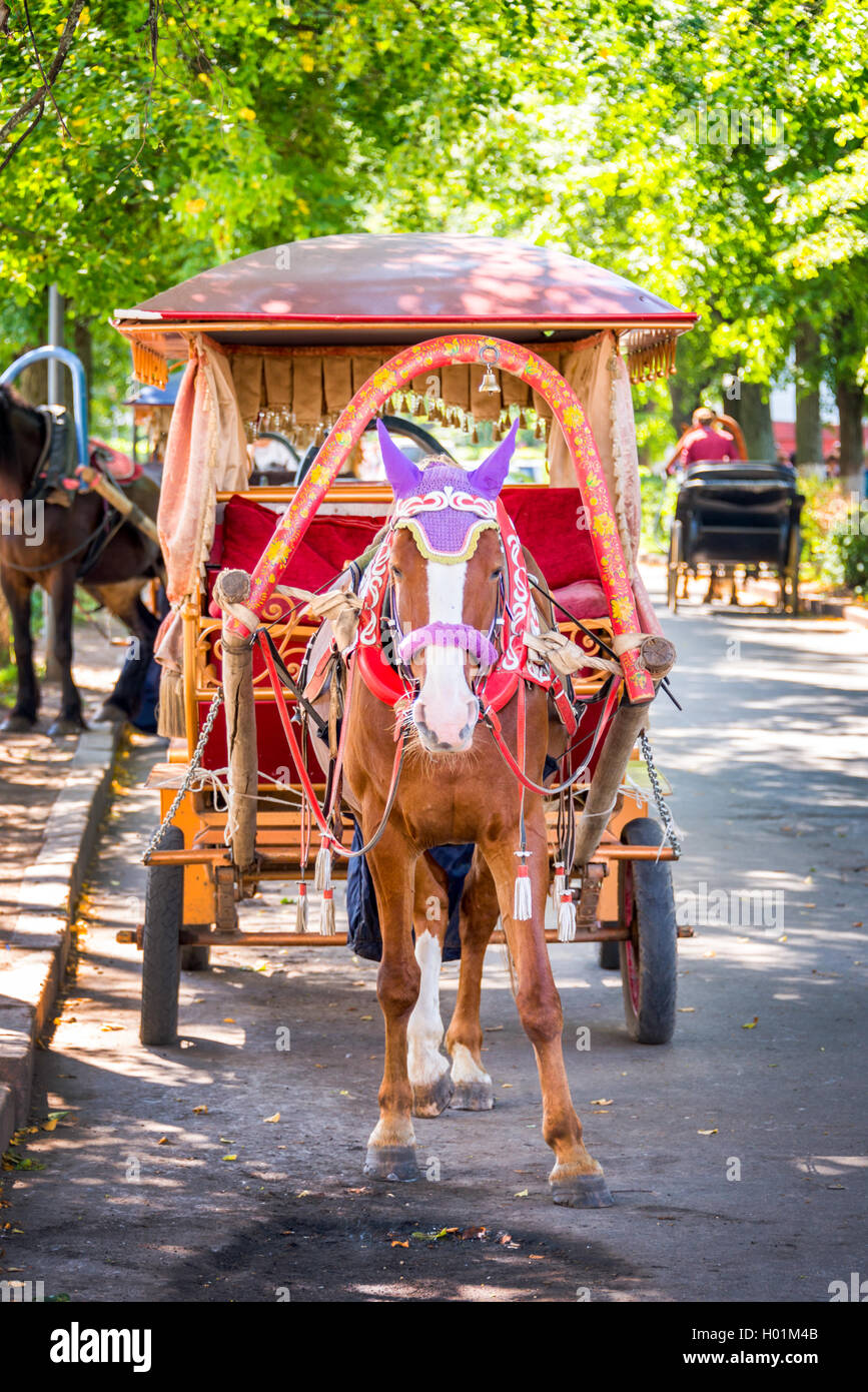 Horse carriage in Suzdal, Golden ring, Russia - Stock Image