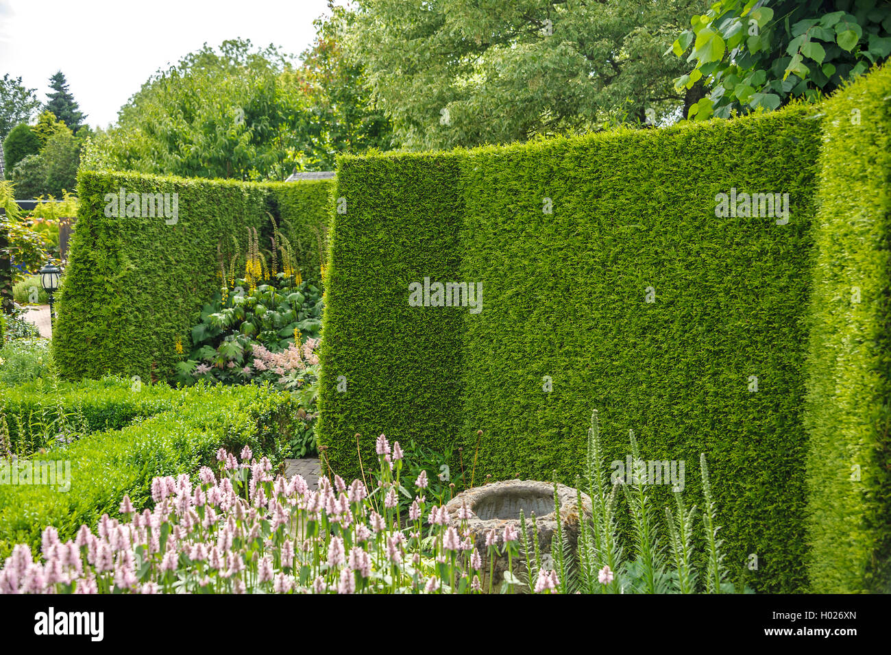 thuja hecke stock photos thuja hecke stock images alamy. Black Bedroom Furniture Sets. Home Design Ideas