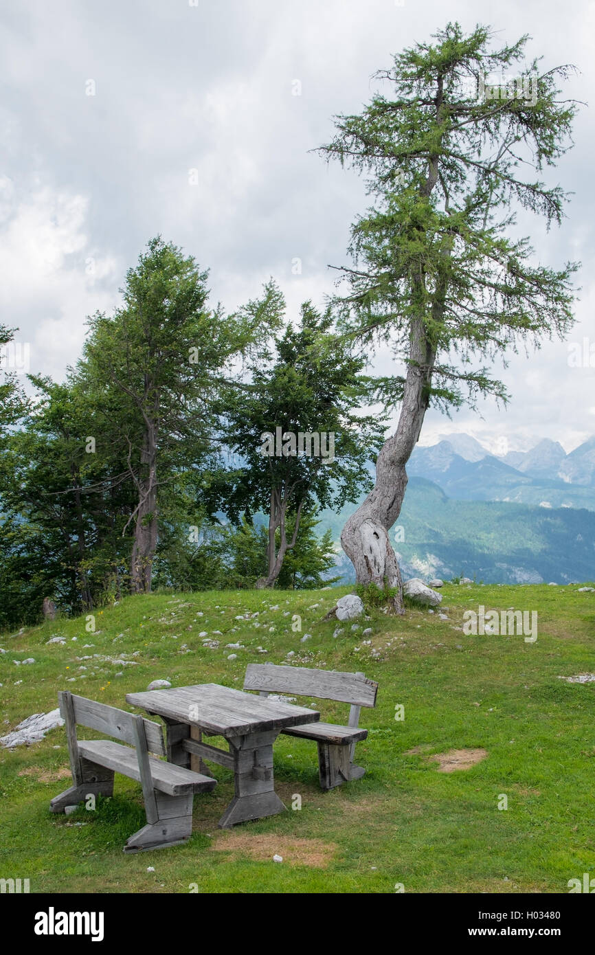 Bench and old pine tree on the top of the mountain Vogel, Slovenia - Stock Image