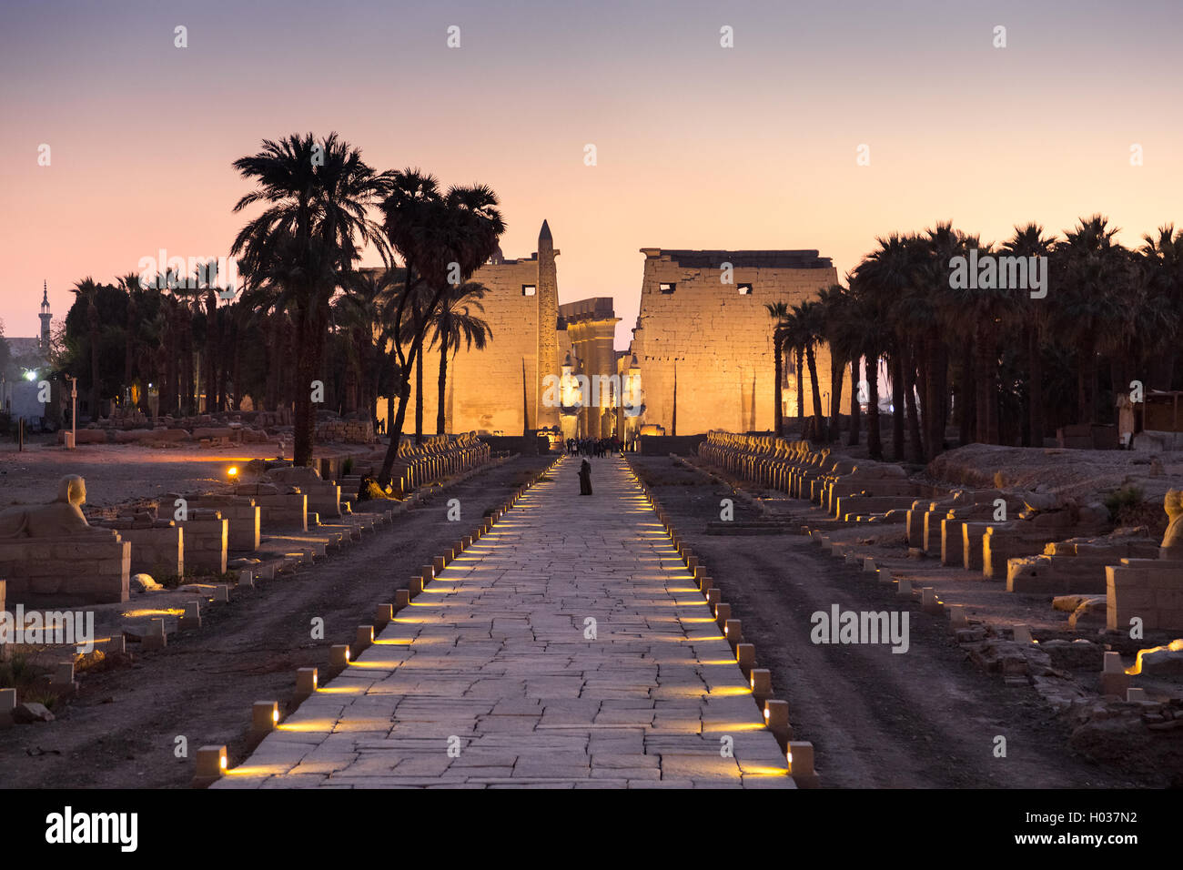 Night shot of Avenue of Sphinxes at Luxor temple. - Stock Image