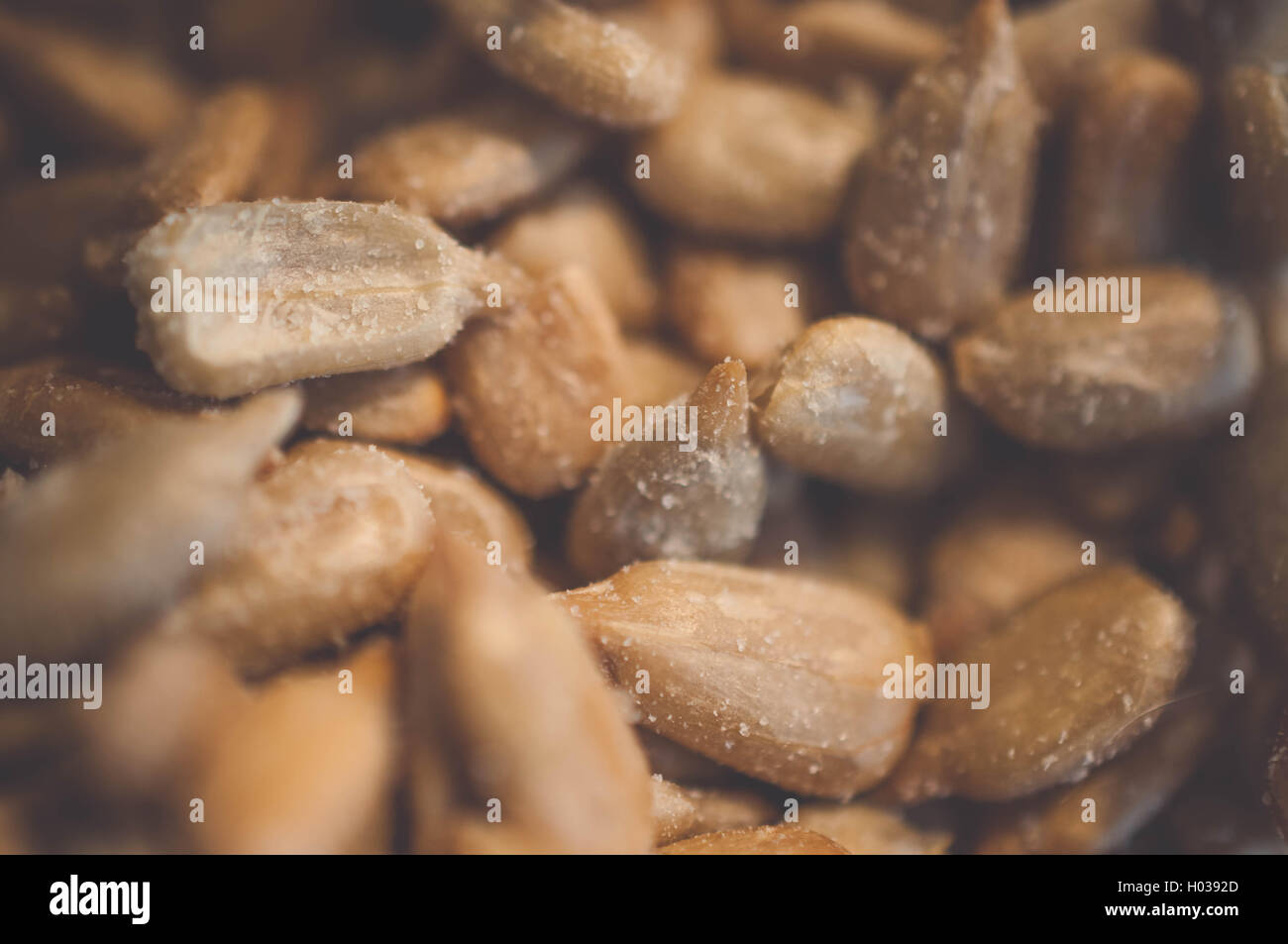 Close up macro image of dehulled kernels from sunflower seeds. - Stock Image