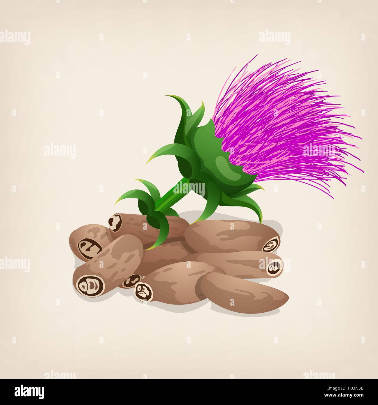 Seeds of a milk thistle with flowers (Silybum marianum, Scotch Thistle, Marian thistle). Vector illustration. - Stock Image