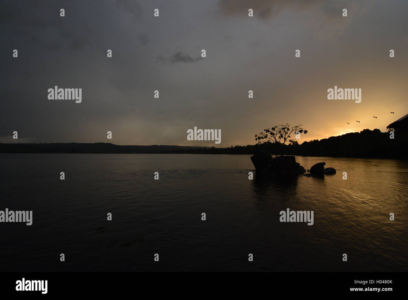 Sunset on the Sources of the Nile in Jinjia, with birds flying on the rainforest - Stock Image