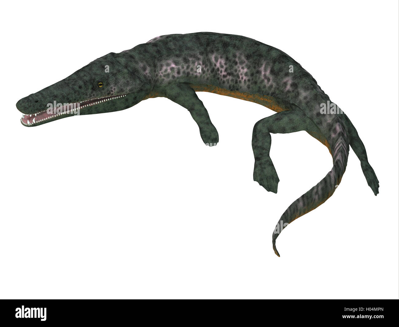 Archegosaurus was an amphibian tetrapod that lived in Europe during the Permian Period. - Stock Image