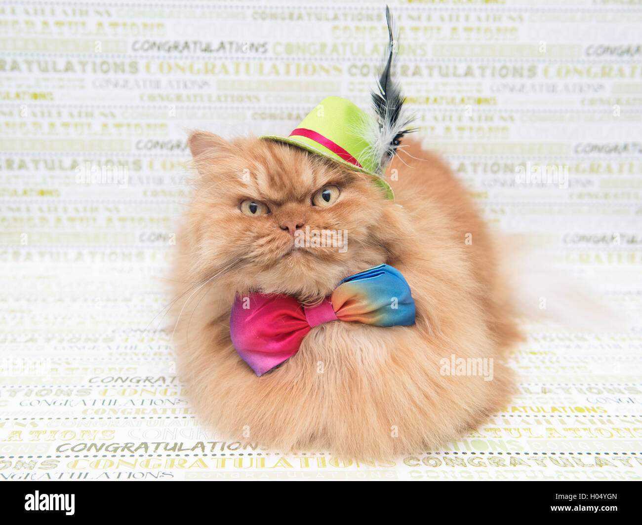 Persian cat wearing top hat and bow tie, - Stock Image
