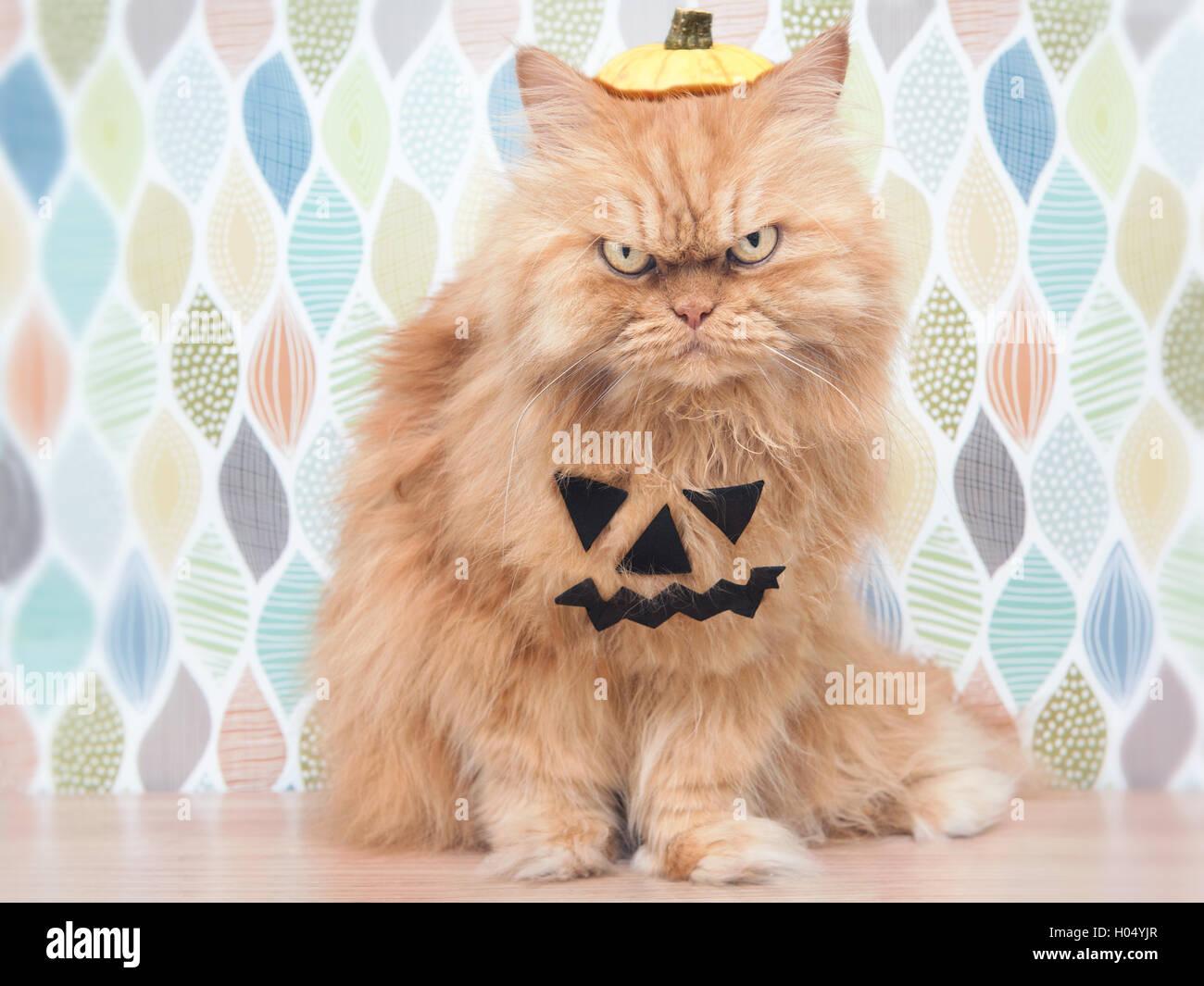 Halloween Cat - Stock Image