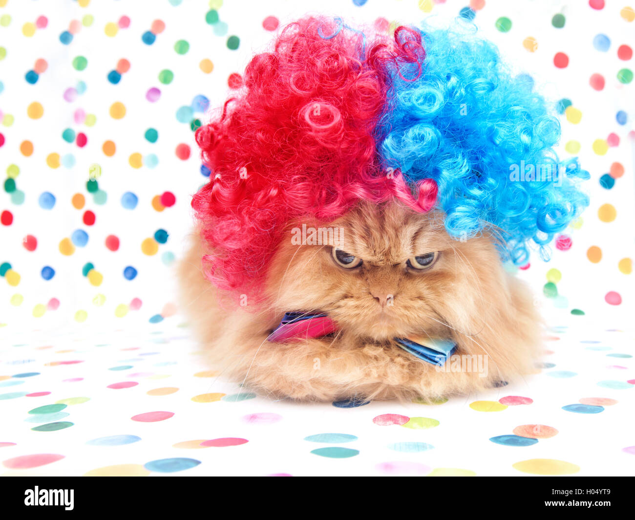 Persian Cat dressed up as a clown - Stock Image
