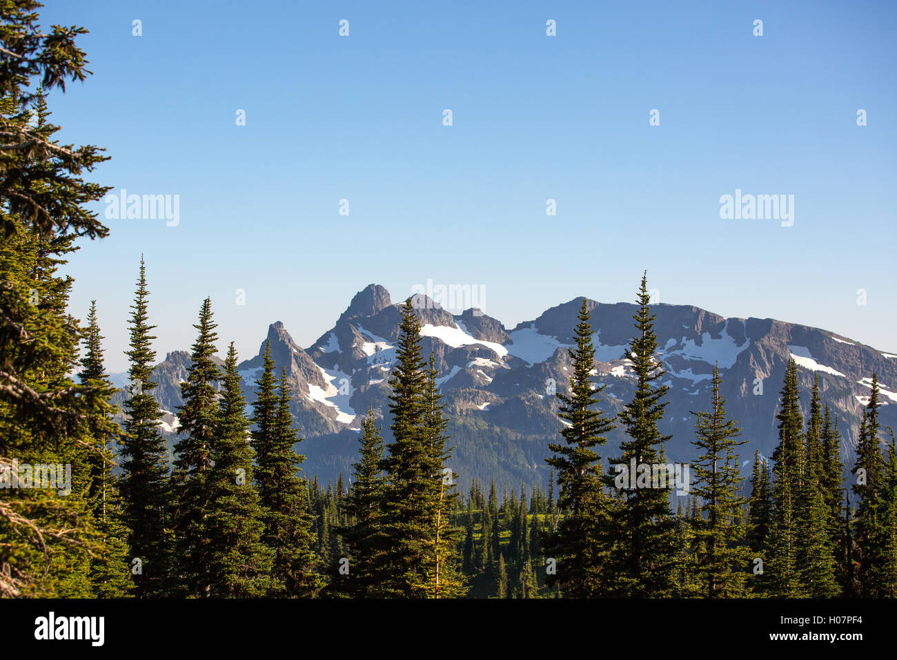 Evergreen trees with a mountain capped with snow. - Stock Image