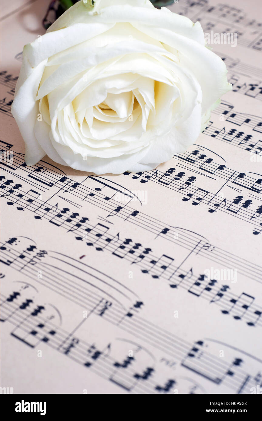 white rose and music sheet - image for book cover - Stock Image