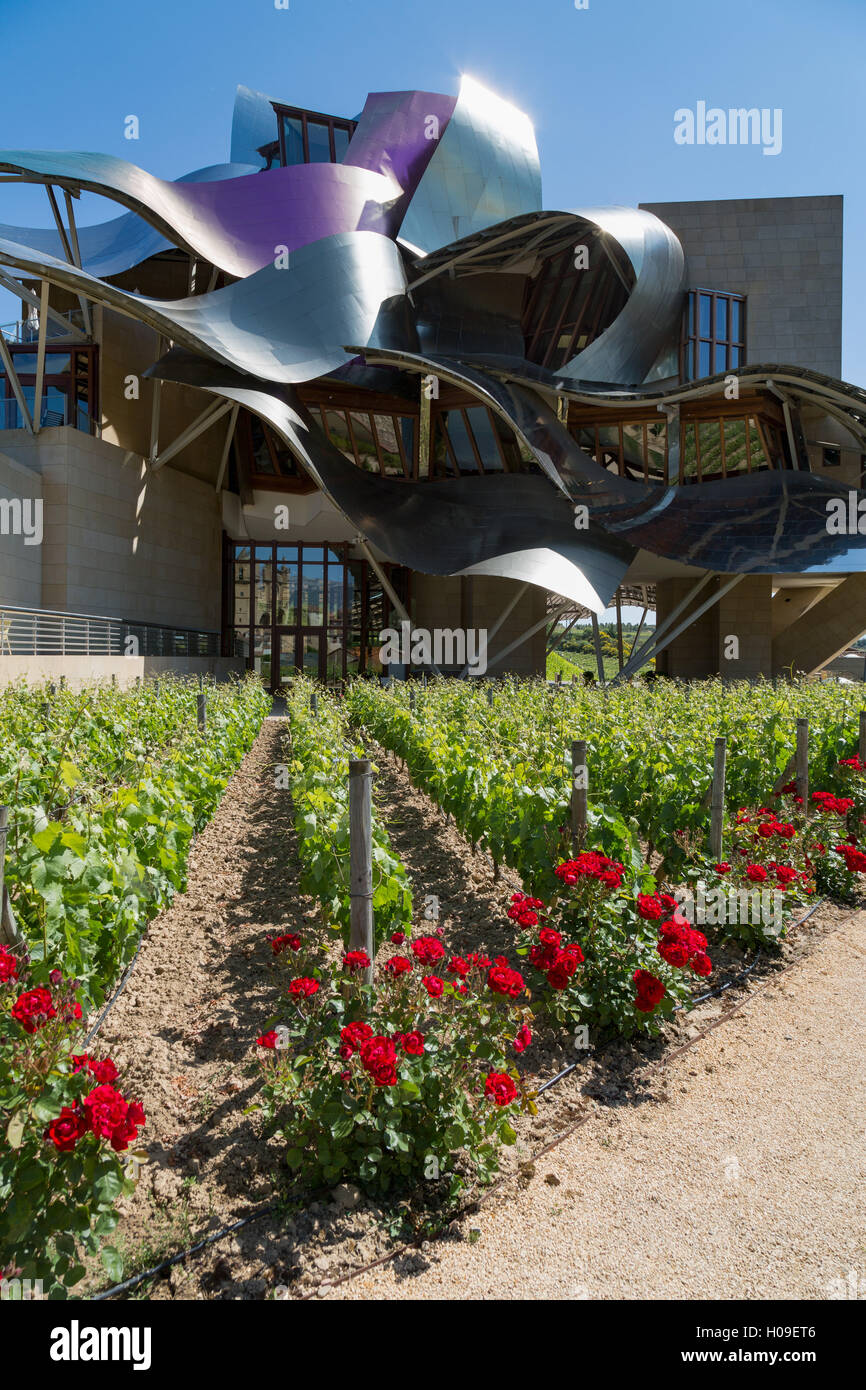 Vines, traditional roses and the striking hotel at Marques de Riscal Bodega, near Elciego, La Rioja, Spain - Stock Image