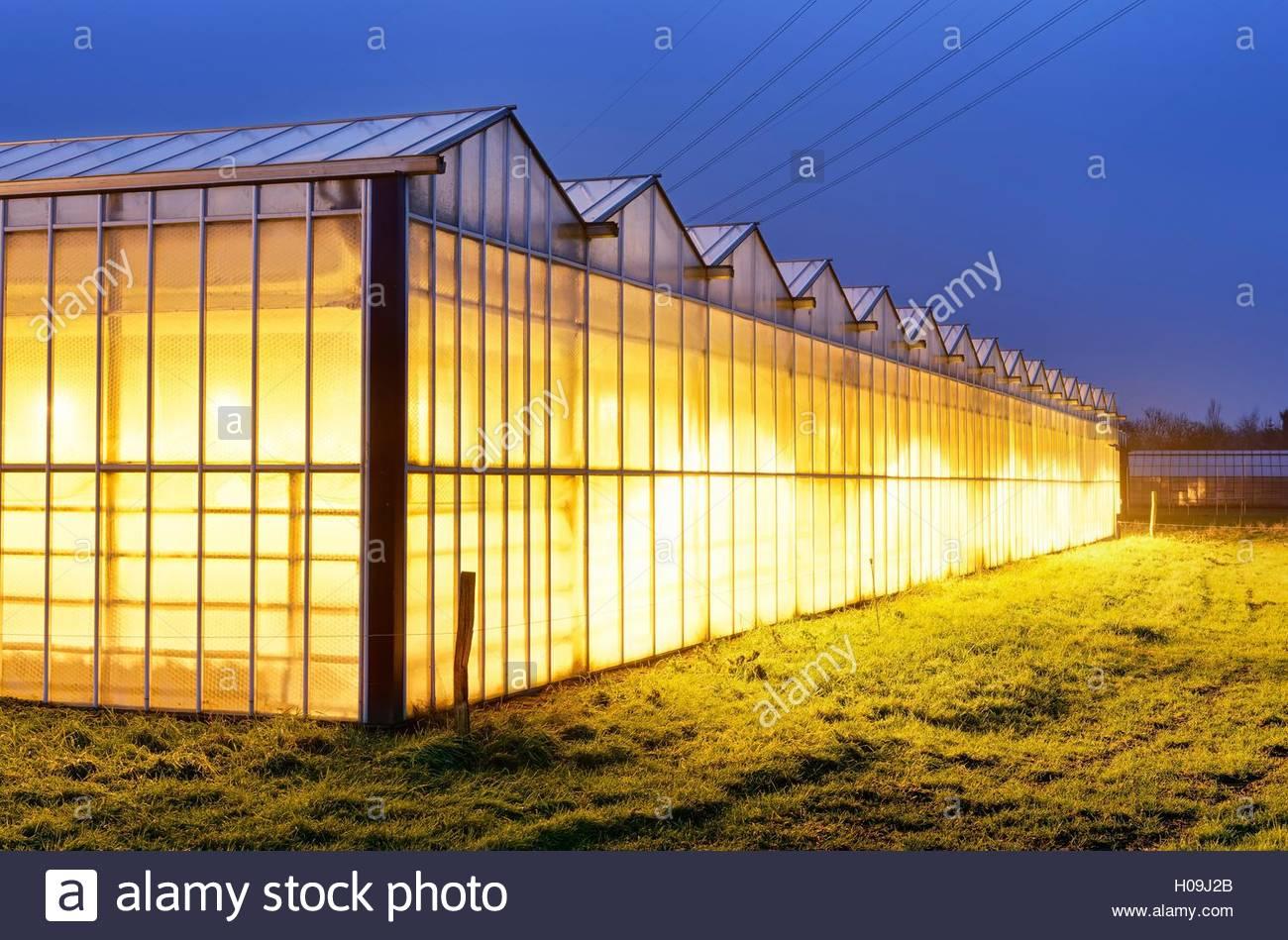 BLWX071275 [ (c) blickwinkel/McPHOTOx/Christian Ohde Tel. +49 (0)2302-2793220, E-mail: info@blickwinkel.de, Internet: - Stock Image