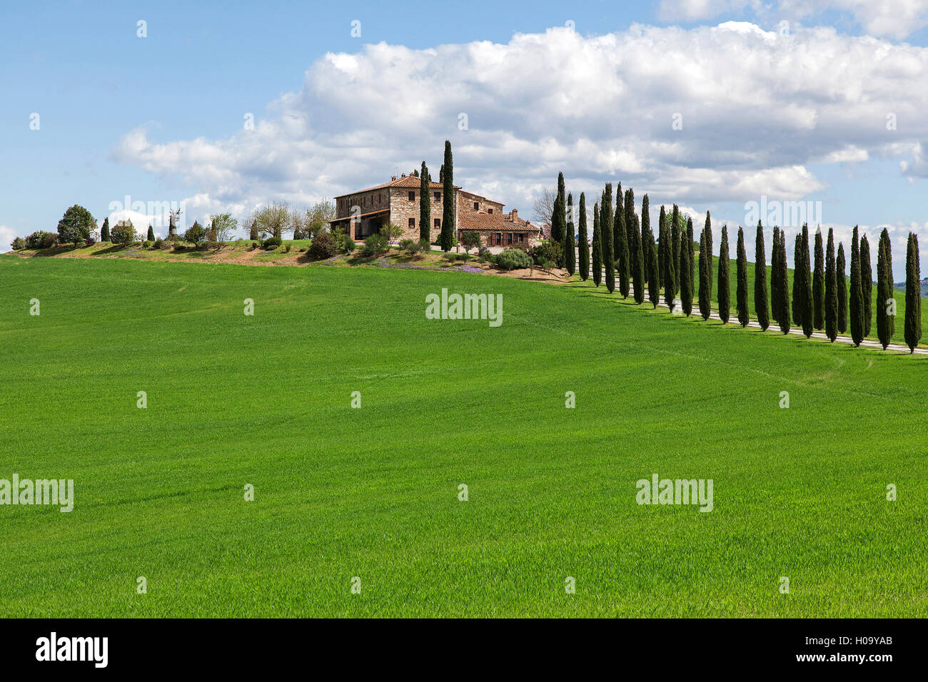 Country estate with cypresses, near San Quirico d'Orcia, Val d'Orcia, Tuscany, Italy - Stock Image