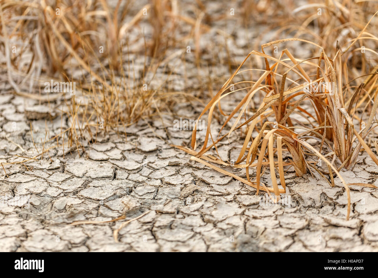Cracked earth and dead plants - Stock Image
