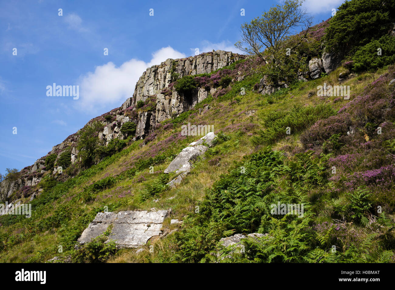 Falcon Clints, Upper Teesdale National Nature Reserve, Durham, England, UK - Stock Image