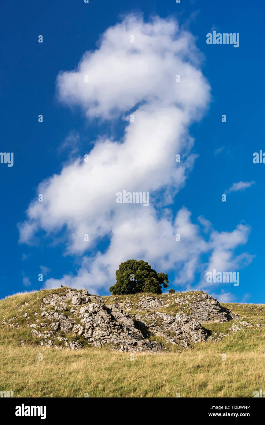 A cloud shaped like a pound note above at lone tree on a hillside. Possiible illustration for investment investments. - Stock Image