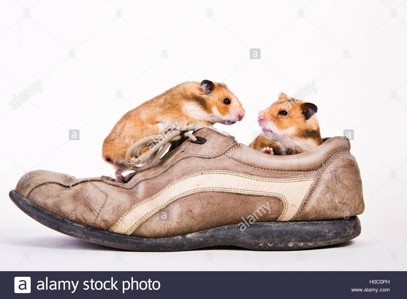 Lustige Schuhe Stock Photos Lustige Schuhe Stock Images Alamy