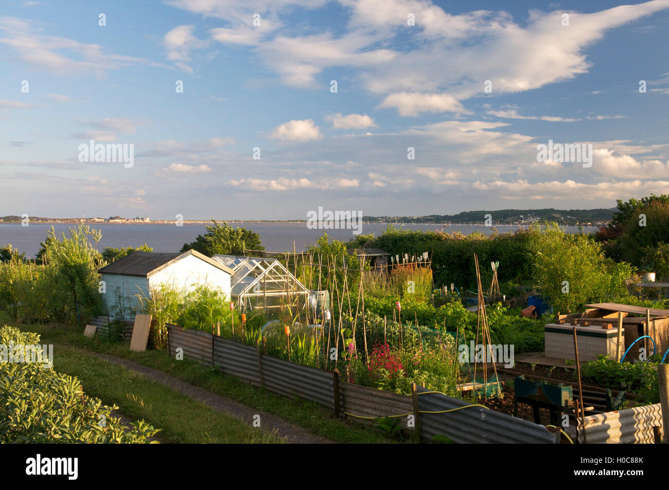Allotments UK - Stock Image