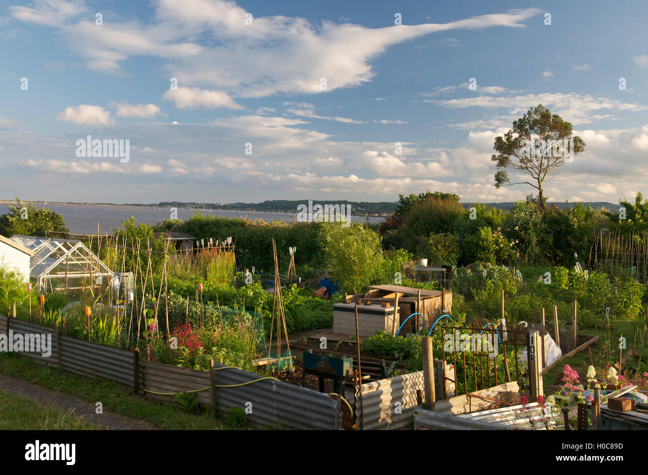 Allotments , Devon, UK - Stock Image