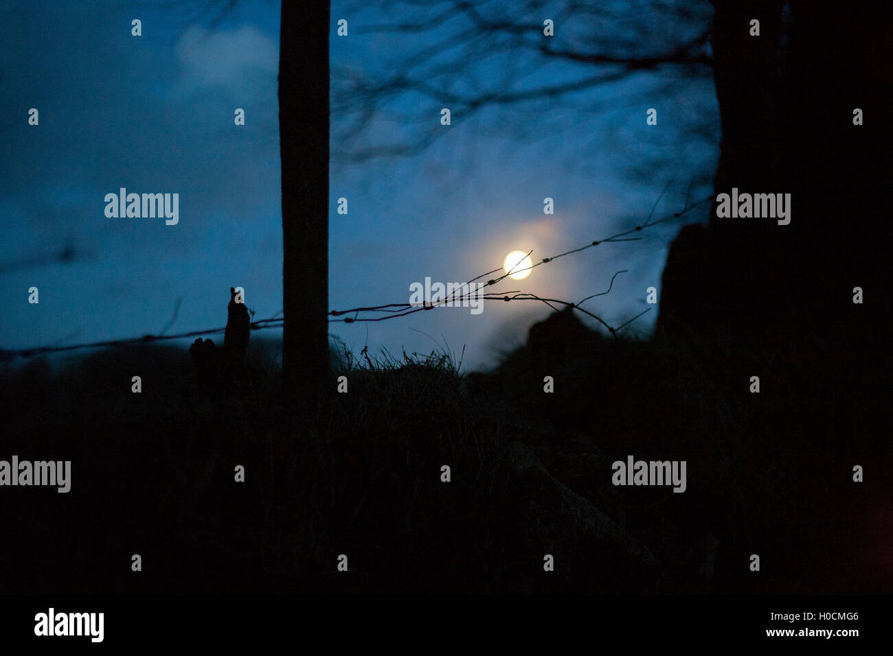 Night shot full moon barbed wire fence  clouds tree branches dusk sun down blue sky dark blue,country countryside, - Stock Image