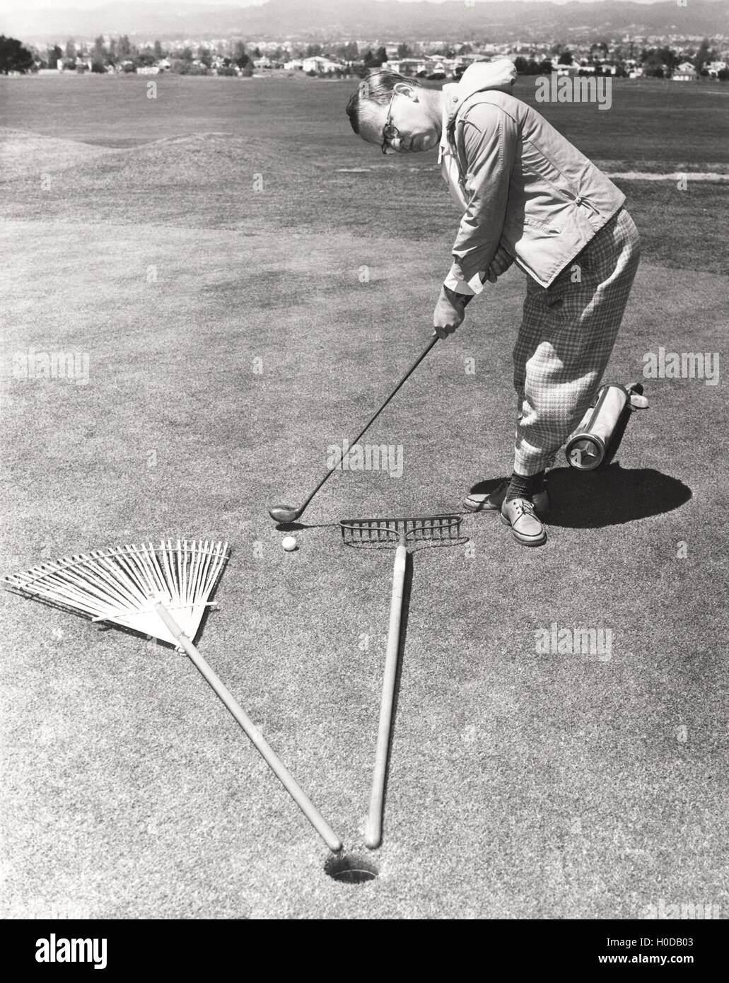 Caught between a rake and a gardening fork on the putting green - Stock Image
