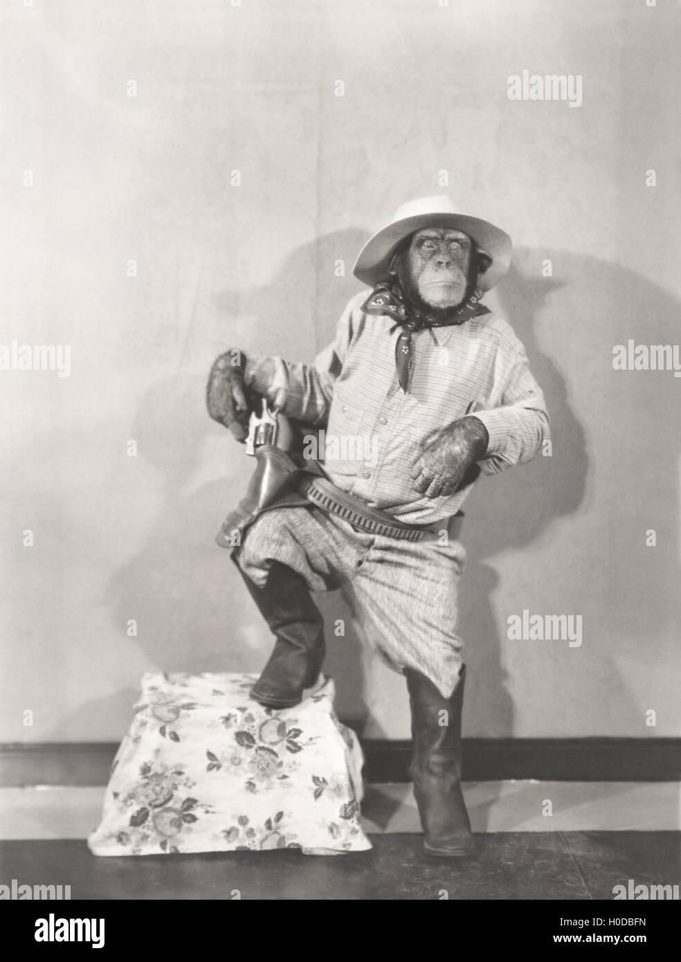 Monkey dressed up like a cowboy Stock Photo