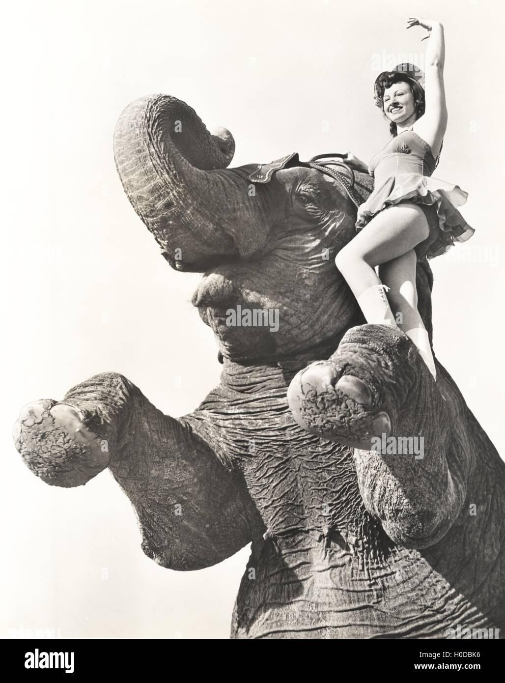 Circus performer posing on elephant - Stock Image