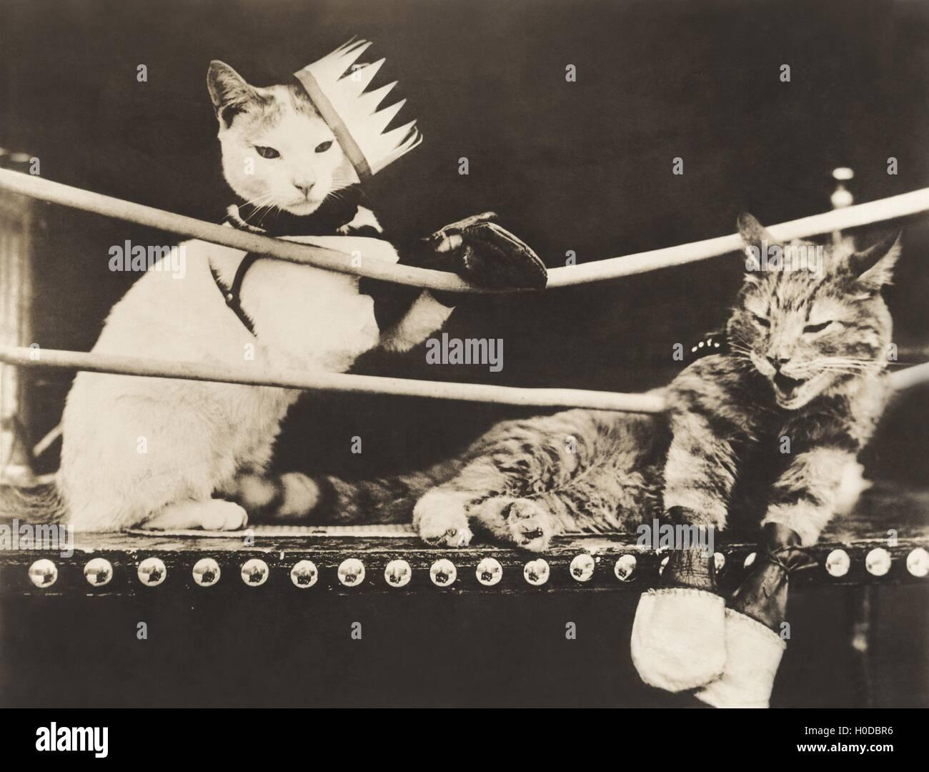 Cat fight Stock Photo